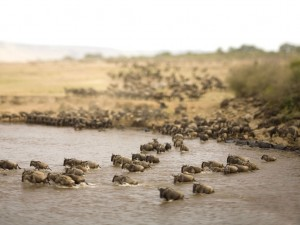 The Great Wildebeest Migration, East Africa